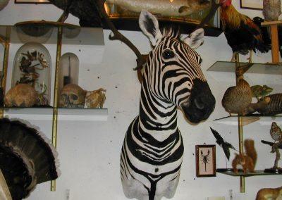 Foreign Mammals 002