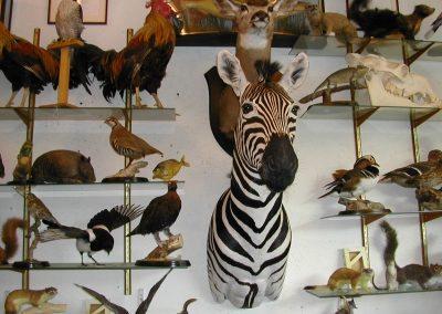 Foreign Mammals 003