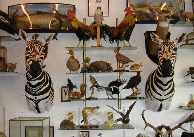 Foreign Mammals 005