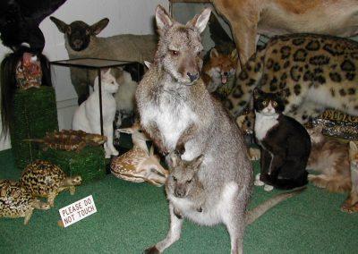Foreign Mammals 007