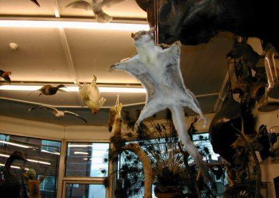 Foreign Mammals 016