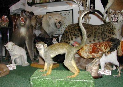 Foreign Mammals 021