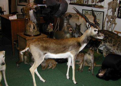 Foreign Mammals 024