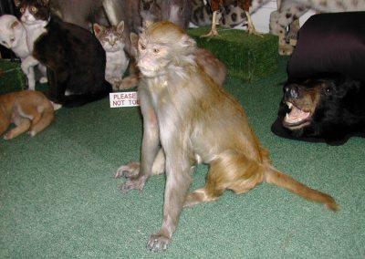 Foreign Mammals 025