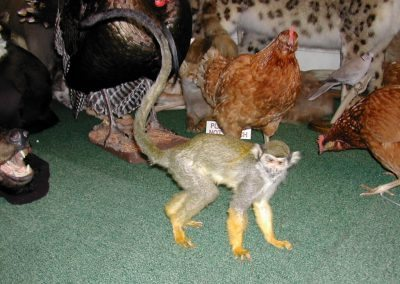 Foreign Mammals 028
