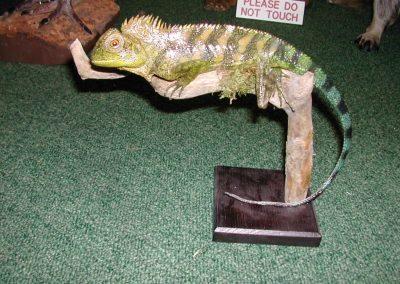 Foreign Mammals 033