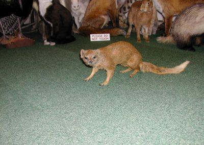 Foreign Mammals 042