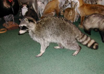 Foreign Mammals 044