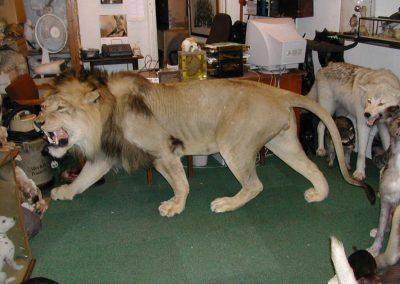 Foreign Mammals 046