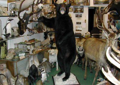 Foreign Mammals 048