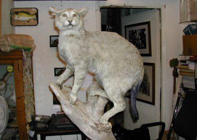 Foreign Mammals 049