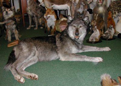 Foreign Mammals 050