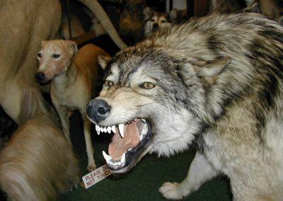 Foreign Mammals 053