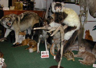 Foreign Mammals 055