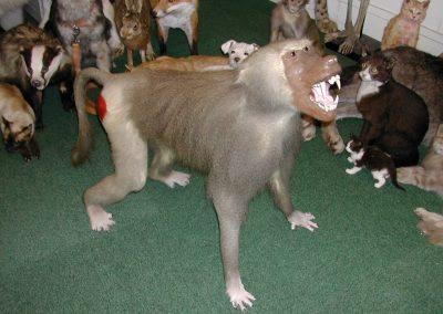 Foreign Mammals 057