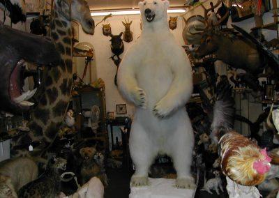 Foreign Mammals 058