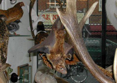 Foreign Mammals 061