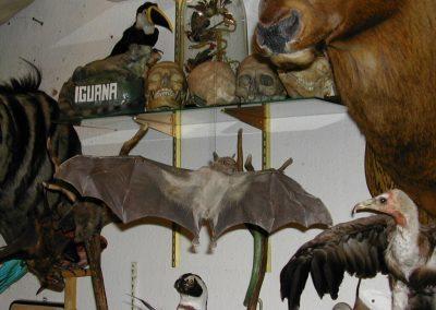 Foreign Mammals 063