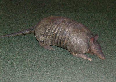 Foreign Mammals 067
