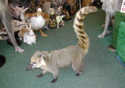 Foreign Mammals 069