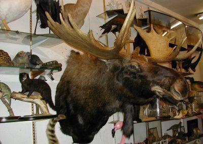 Foreign Mammals 075