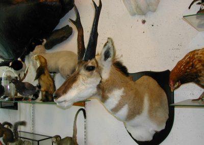 Foreign Mammals 076