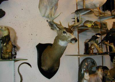 Foreign Mammals 077