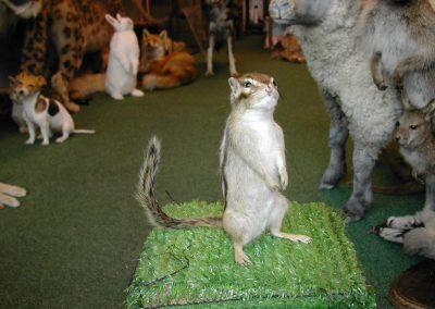Foreign Mammals 079