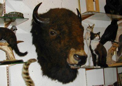Foreign Mammals 081