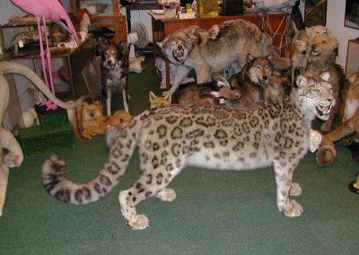 Foreign Mammals 085