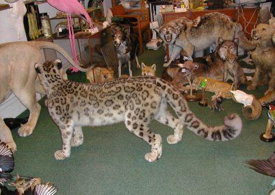 Foreign Mammals 086