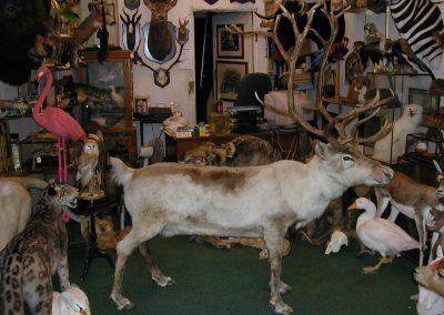 Foreign Mammals 087