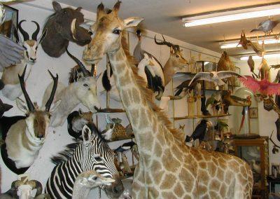 Foreign Mammals 090