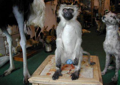 Foreign Mammals 097