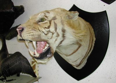 Foreign Mammals 100