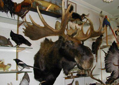 Foreign Mammals 101