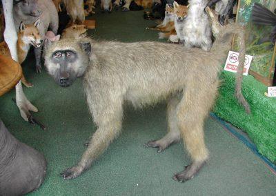 Foreign Mammals 102