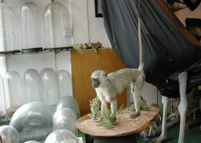 Foreign Mammals 104