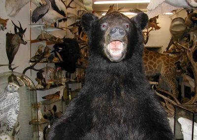 Foreign Mammals 112
