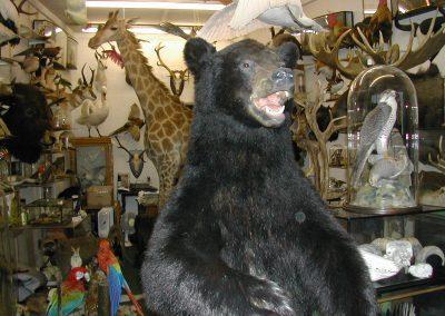 Foreign Mammals 113