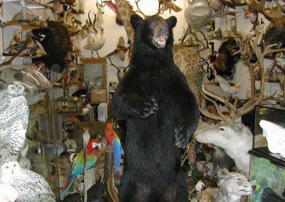 Foreign Mammals 115