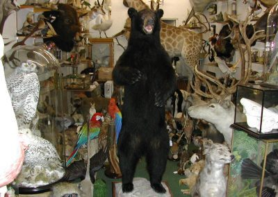 Foreign Mammals 116
