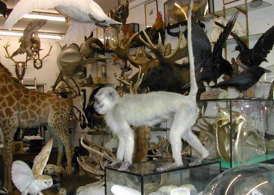 Foreign Mammals 125