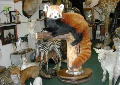 Foreign Mammals 137