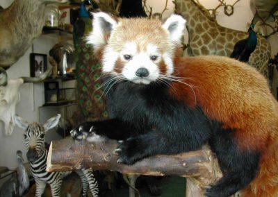 Foreign Mammals 138