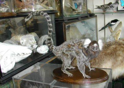 Foreign Mammals 140