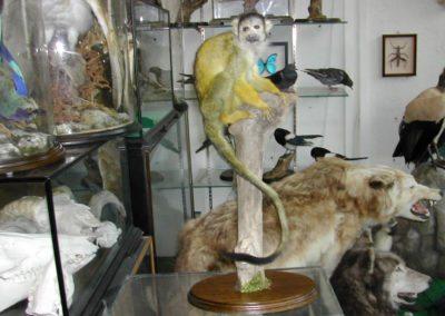 Foreign Mammals 142