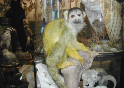 Foreign Mammals 143