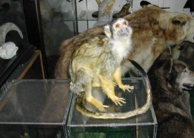 Foreign Mammals 144