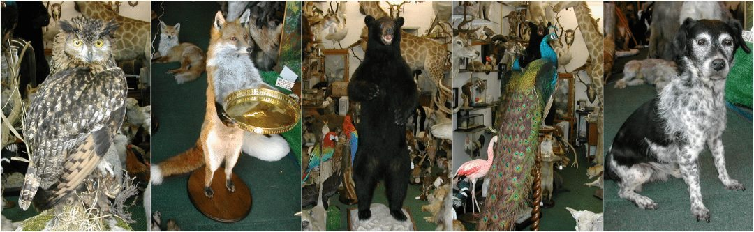 Taxidermy Specialists London